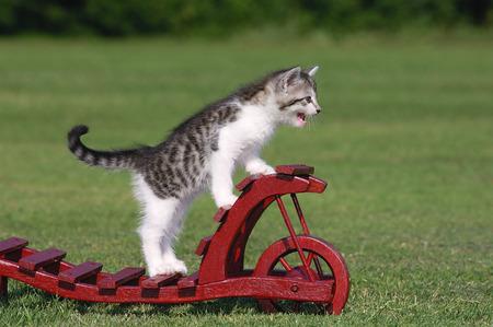 domestication: Portrait of Kitten