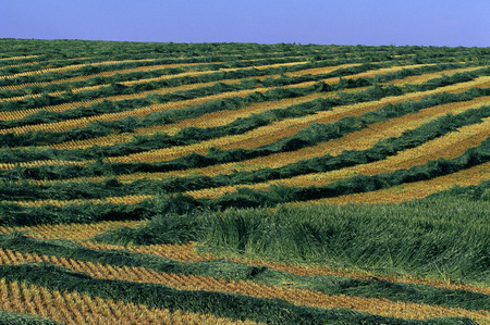 repeated: Overview of Field Crop, Airdrie, Alberta, Canada