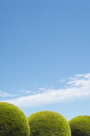 repeated: Round Hedges and Blue Sky