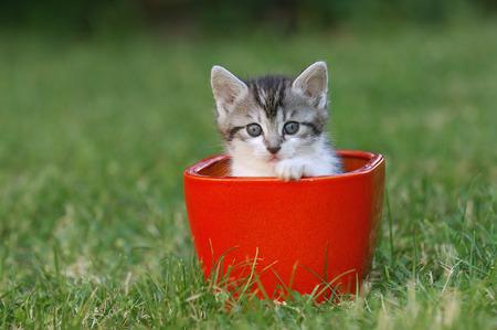 felid: Kitten in Flower Pot