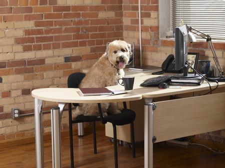 homeoffice: Dog Sitting at Desk