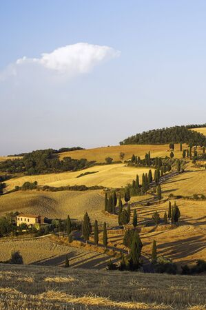 Winding Road with Cypress Trees, Tuscany, Italy