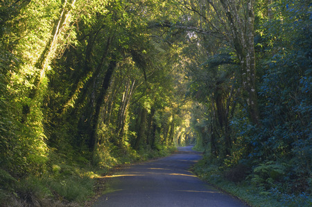 travelled: Road, Egmont National Park, North Island, New Zealand