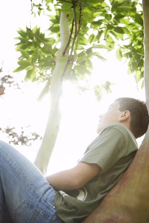 Teenage Boy Sitting in Tree
