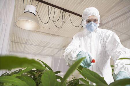 studied: Scientist in Greenhouse