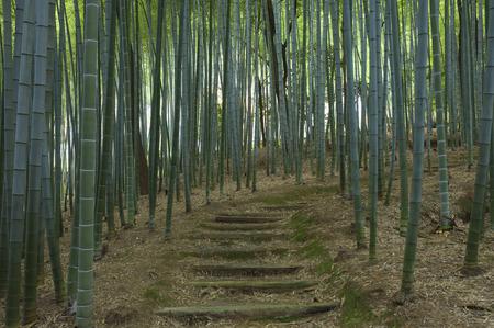 Bamboo Path, Adashino Nembutsuji Temple, Kyoto, Japan LANG_EVOIMAGES
