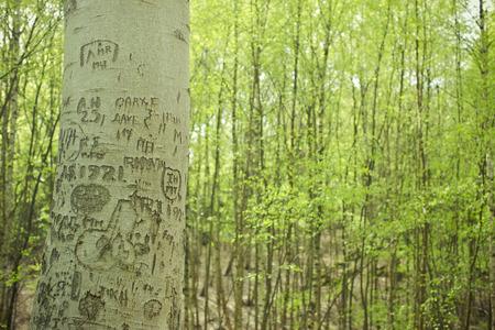 Graffiti on Tree, Epping Forest, Essex, United Kingdom