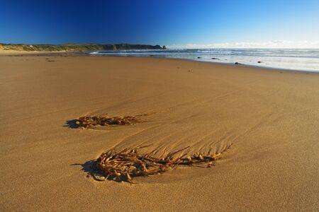 oceanic: Sea Kelp at Low Tide, Cape Woolamai, Phillip Island, Victoria, Australia
