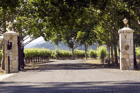 lamp shade: Vineyard in Napa Valley, California, USA