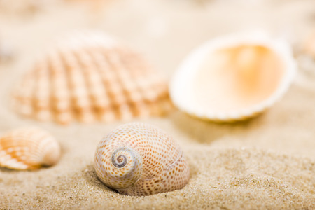 Seashells in Sand LANG_EVOIMAGES