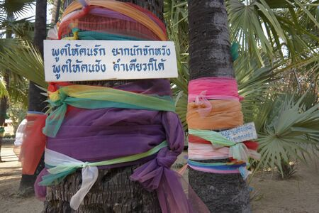 phra nakhon si ayutthaya: Sacred Palm Trees near Ayutthaya, Thailand