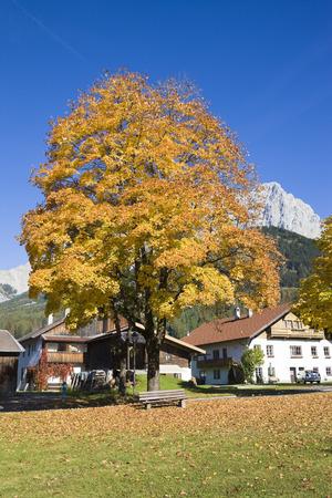 Acero e case in autunno, Ehrwald, Tirolo, Austria LANG_EVOIMAGES