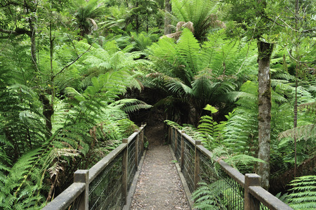 Path, Dandenong Ranges National Park, Victoria, Australia