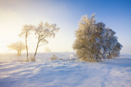 Snow Covered Trees, Haute Fagnes, Wallonia, Belgium LANG_EVOIMAGES