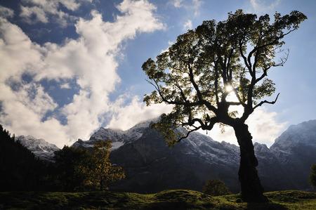 Maple Tree by Mountains, Grosser Ahornboden, Tirol, Austalia