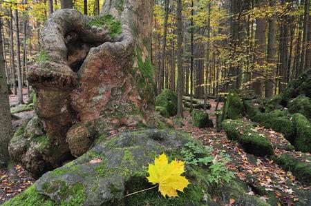 Druidenhain, Franconian Switzerland, Bavaria, Germany
