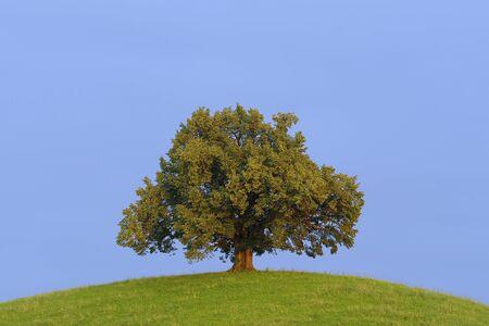 Lone Tree, Canton of Zurich, Switzerland