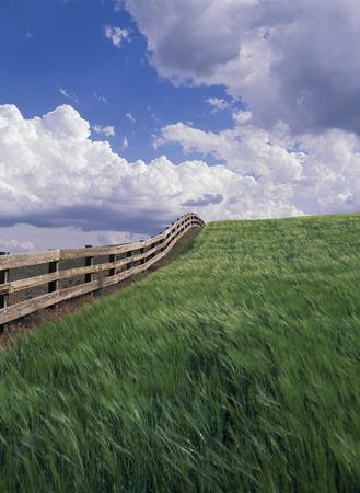 Field of Grass, Othello, Washington, USA