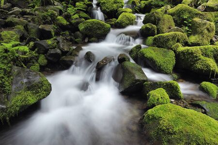streamlet: Sol Duc River, Olympic National Park, Washington State, USA LANG_EVOIMAGES