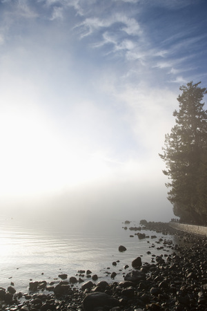 Shoreline and Tree in Fog LANG_EVOIMAGES