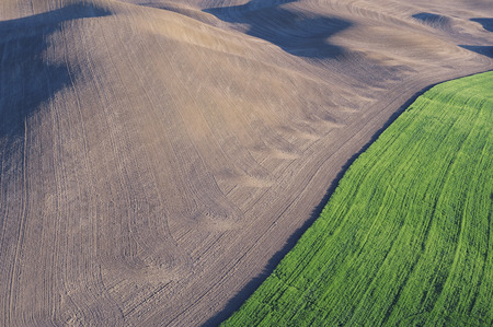 comparable: Fields, Palouse Region, Palouse, Whitman County, Washington State, USA