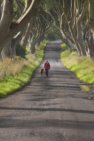 Woman Walking Dog, Dark Hedges, Stanocum, Antrim County, Northern Ireland LANG_EVOIMAGES