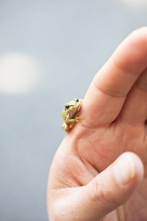 tiny frog: Small Frog on Childs Hand
