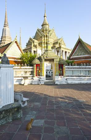 felid: Cat, Bangkok, Central Thailand, Thailand