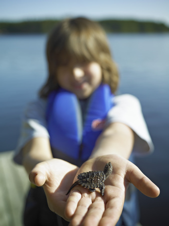 snapping turtle: Boy Holding Baby Snapping Turtle, Cache Lake, Algonquin Park, Ontario, Canada