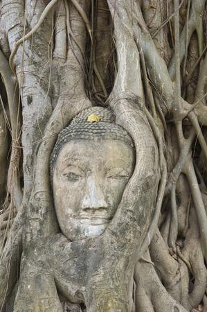 phra nakhon si ayutthaya: Buddhas Head Carved in a Tree, Wat Mahathat, Ayutthaya, Ayutthaya Province, Thailand