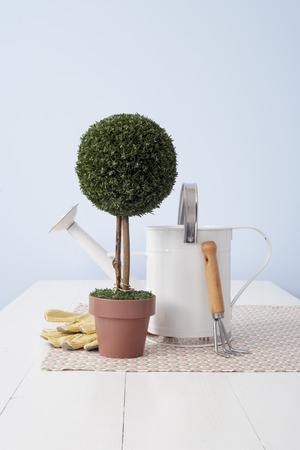 Potted Plant and Gardening Utensils LANG_EVOIMAGES