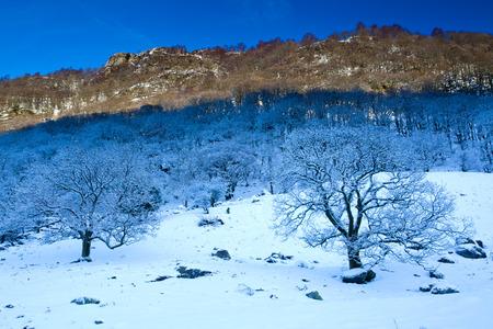 Snow Covered Trees, Stonethwaite Valley, Lake District, Cumbria, England