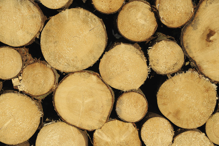 comparable: Stack of Tree Trunks, Germany