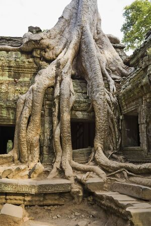 cambodge: 12th - 13th Century Khmer Temple at Ta Prohm, Angkor, Cambodia LANG_EVOIMAGES