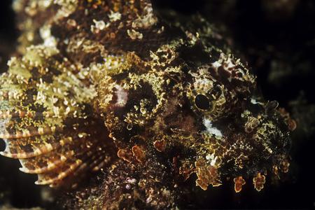 dragonfish: Fish, Madagascar
