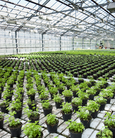 conservatories: Organic Herbs in Greenhouse, South Iceland, Iceland LANG_EVOIMAGES