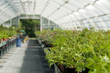 conservatories: Plants in Greenhouse
