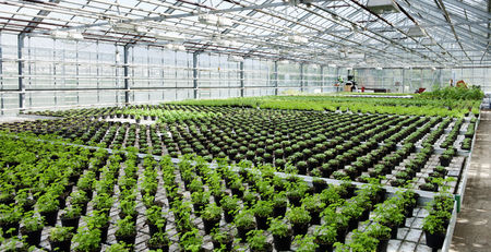 conservatories: Organic Herbs in Greenhouse, Laugaras, South Iceland, Iceland LANG_EVOIMAGES