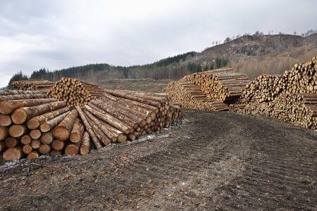 Piles of Logs, Scotland