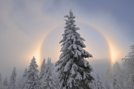 captivation: Halo and Snow Covered Trees,Ore Mountains,Fichtelberg,Saxony,Germany