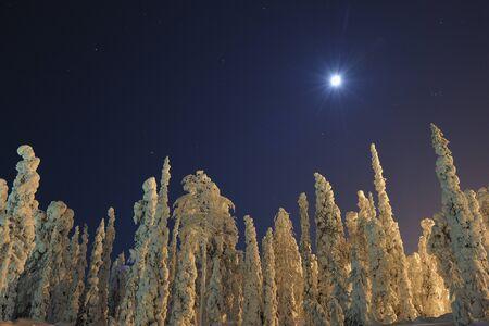 captivation: Snow Covered Trees,Rukatunturi,Kuusamo,Nordoesterbotten,Finland