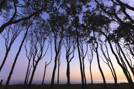 captivation: European Beech Trees of Ghost Forest and Baltic Sea,Nienhagen,Mecklenburg-Vorpommeren,Germany