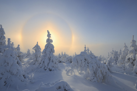 captivation: Halo and Snow Covered Trees,Fichtelberg,Ore Mountains,Saxony,Germany