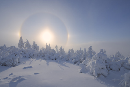 captivation: Halo over Snow Covered Trees,Fichtelberg,Ore Mountains,Saxony,Germany LANG_EVOIMAGES