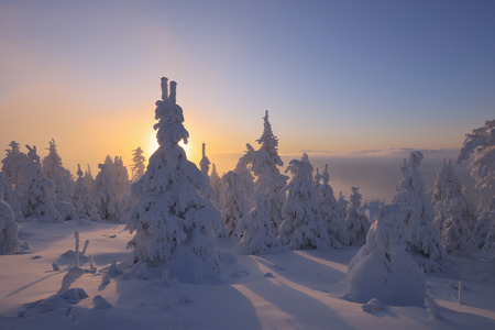 captivation: Snow Covered Trees at Sunset,Fichtelberg,Ore Mountains,Saxony,Germany LANG_EVOIMAGES