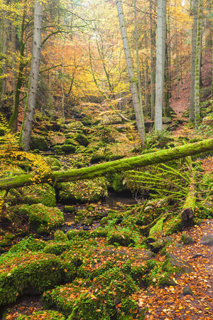 captivation: Monbachtal,Black Forest,Baden-Wurttemberg,Germany LANG_EVOIMAGES