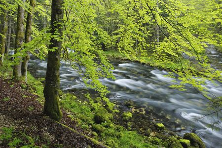 Spring Foliage along Orbe River,Vallorbe,Jura Mountains,Canton of Vaud,Switzerland