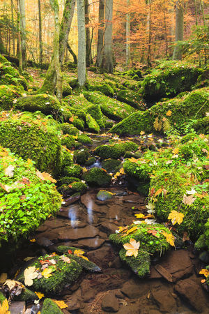 captivation: Stream,Monbachtal,Black Forest,Baden-Wurttemberg,Germany
