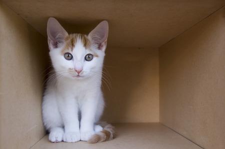Kitten in Cardboard Box LANG_EVOIMAGES