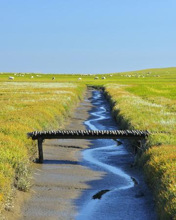 westerheversand: Tide Way with Bridge,Westerheversand,Summer,Westerhever,Tating,Schleswig-Holstein,Germany LANG_EVOIMAGES